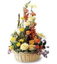 "Sunshine Splendor â""¢ Arrangement"