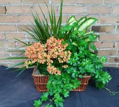 Mixed Planter Basket (1)